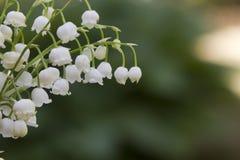 värld för vildmark för dal för liljanaturryss Blomma trä Arkivbild