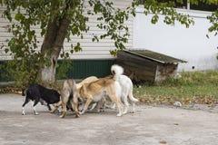 värld för vildmark för ryss för hundgruppnatur Arkivfoton