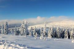 Värld under snön Arkivfoto