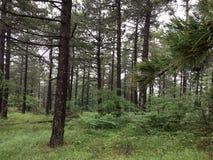 Världen av gröna nya skogar royaltyfri fotografi