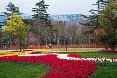 Världen berömda Tulip Festival i Emirgan parkerar, Istanbul, Turkiet Blomning av tulpan Royaltyfria Foton