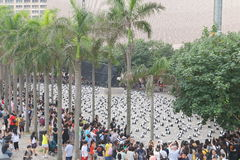 Världen för 1600 pandor turnerar i Hong Kong Fotografering för Bildbyråer