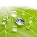 Världen i en droppe av vatten Arkivfoton