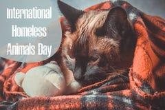 Världsdag av tillfälliga djur 18 August International Homeless Animals Day royaltyfri fotografi