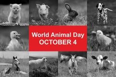 Världsdjurdag Arkivbild