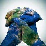 Världskarta i de knäppte fast händerna av en man (jordöversikten som förbi möbleras Royaltyfri Fotografi