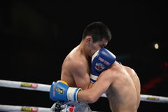 Världsserie av boxning: Ukraina Otamans vs det ryska boxninglaget Royaltyfria Bilder