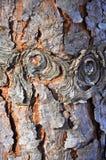 Värma sig av sörjer trädet royaltyfri foto