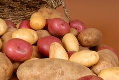 värma sig för closeupen som russet för potatisar ut röd spiller white Fotografering för Bildbyråer