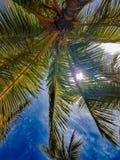 Värma sig under en palmträd royaltyfri foto