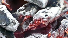 Värme i branden stock video