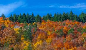Värme och hemtrevlighetskogen Fotografering för Bildbyråer