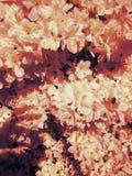 Värme väder Royaltyfri Fotografi