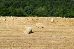 Västra fält för hö för NC-bergbönder Arkivfoto