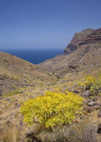 Västra Gran Canaria, Maj Fotografering för Bildbyråer