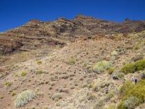Västra Gran Canaria, Maj Royaltyfri Fotografi