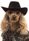 västra hund Royaltyfria Bilder