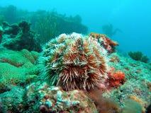 västra indiskt hav för ägg arkivbild