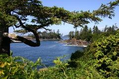 västra kust Fotografering för Bildbyråer