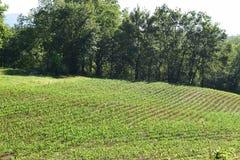 Västra NC-berglantgård och planterat fält Royaltyfri Foto