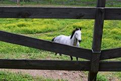 Västra NC-hästlantgård och trästaket Arkivfoto