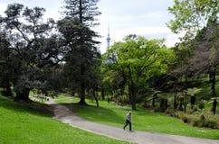 Västra parkera i Ponsonby, Auckland Nya Zeeland NZ NZL Fotografering för Bildbyråer