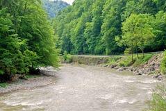 västra skogukrainare Arkivbild