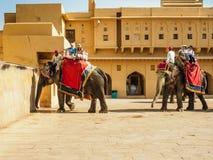 Västra turister som rider elefanterna på Amber Fort i Jaipur, Indien Arkivbilder