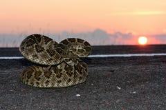 Västra uppsättning för sol för diamondbackrattlesnake/ Royaltyfria Bilder