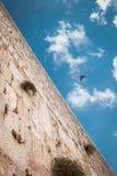 Västra vägg med fågeln i himlen, Jerusalem, Israel Arkivfoto