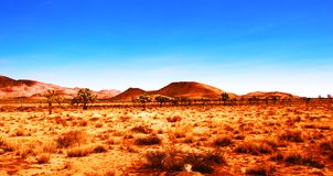 västra wild Arkivbilder