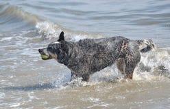 Vät hunden Royaltyfria Foton