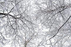 Väva samman trädfilialer Royaltyfri Foto