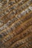 vävt furry hår royaltyfria foton