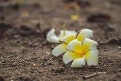 Växa för blomma på sprickagatan, mjuk fokus, tom text - bild royaltyfri fotografi