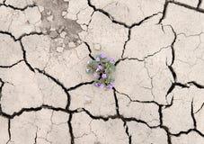 Växa för blomma ut ur sprickor i jorden Arkivbilder
