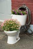 Växa för blommor i toalett arkivfoto