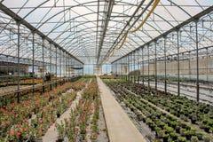 Växa för blommor i växthusställe arkivbild