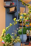 Växa för blommor på yttre trappuppgång royaltyfri bild