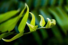 växa för fern arkivbilder
