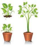 Växa för grön växt Royaltyfri Bild