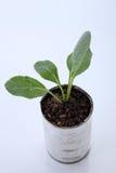 Växa för grönsak Arkivfoto