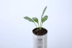 Växa för grönsak Royaltyfria Bilder