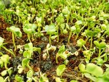 Växa för planta Royaltyfria Bilder
