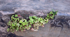 Växa för växt Royaltyfri Foto
