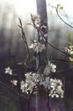 Växa för vita blommor på en fatta Arkivbild
