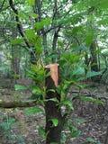 Växa klippt ner trädstammen Arkivfoton