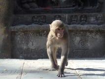 Växa upp med buddisten royaltyfria bilder
