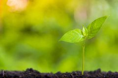 Växande affärstillväxt och finansiell odling av växter från mynt i glasflaskor på grön bakgrund royaltyfria bilder