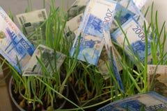 Växande dollarräkning för pengar som växer i jord royaltyfria bilder
